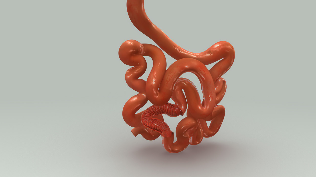 3d obj smal intestine section