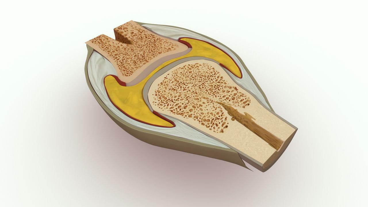 knee joint bone structure 3d obj