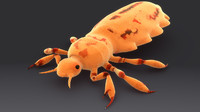 pediculus louse infects 3d model