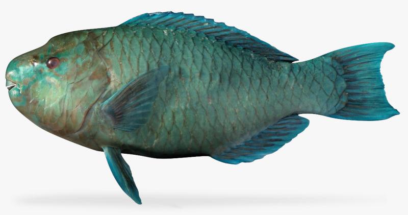 azure parrotfish 3d fbx