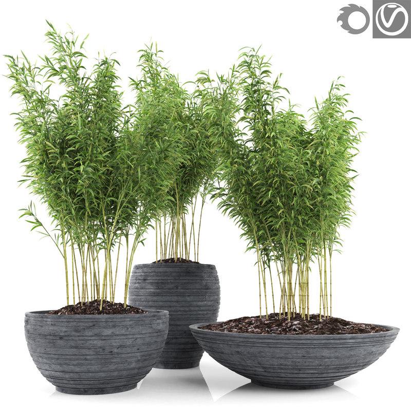 bamboo plants fargesia murielae obj