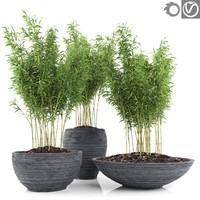 3d bamboo plants fargesia murielae model