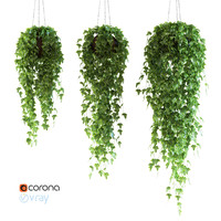Set of 3 models Ivy in pots hanging on a chain