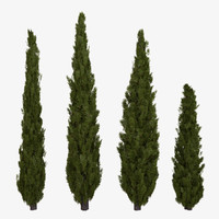 3d italian cypress tree model