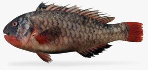 3d loosetooth parrotfish