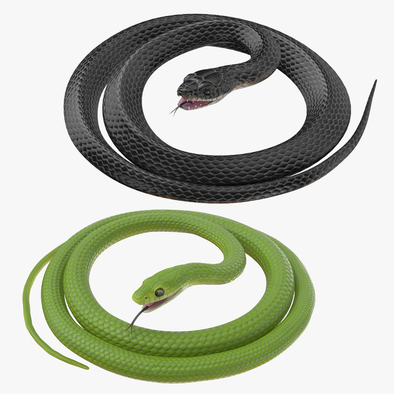 3d rigged snakes black green