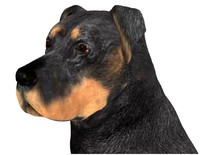 doberman 3d 3ds