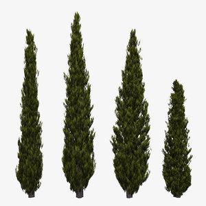 3d model of italian cypress trees