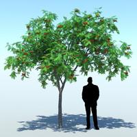 sorbus aucupari rowan tree 3d fbx