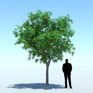 3d sorbus aucuparia rowan tree model