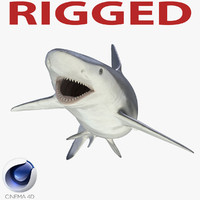 3d smalltail shark rigged model