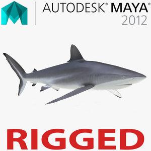 3d model silky shark rigged