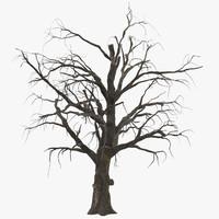 Old Dead Tree 01