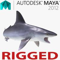 ma sandbar shark rigged