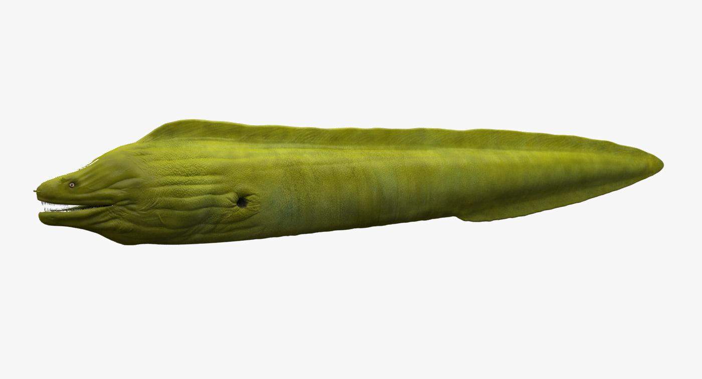 3d moray eel