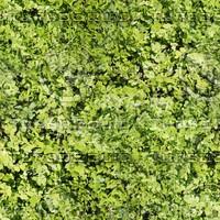 Green Bush  [2K Tileable Texture]