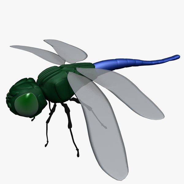 3d model dragonfly insect