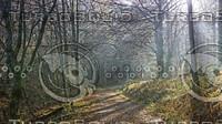Hiking trail in Arnsberg