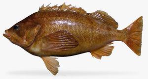 3d ma bank rockfish