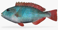 3d x redband parrotfish