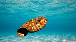 obj ammonite fossil