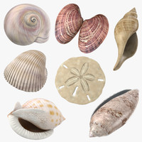 3d common seashells shells model