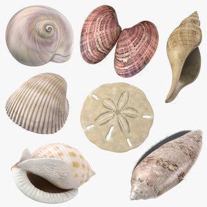 3d common seashells shells model