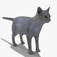 Mix Breed Domestic Gray Cat