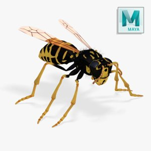 3d realistic wasp -