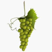 green grapes 3d max