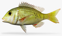3d model lethrinus atkinsoni
