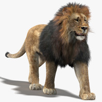 lion fur rigging animation 3d model