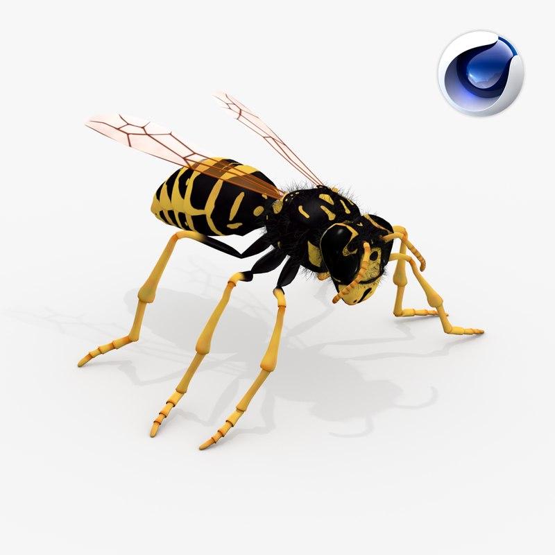 realistic wasp - 3d model