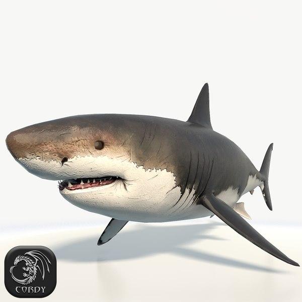 realistic great white shark 3d model