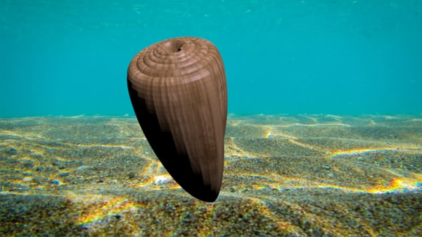 olive seashell 3d model