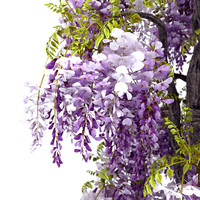 wisteria sinensis flowering 3d model