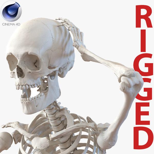 3d model human male skeleton rigged