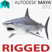 3d shortfin mako shark rigged model