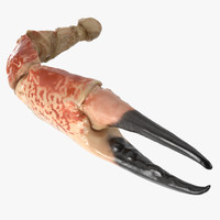 3d crab claw