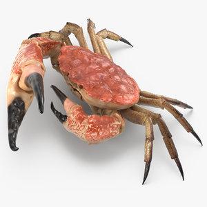 queen crab 3d max