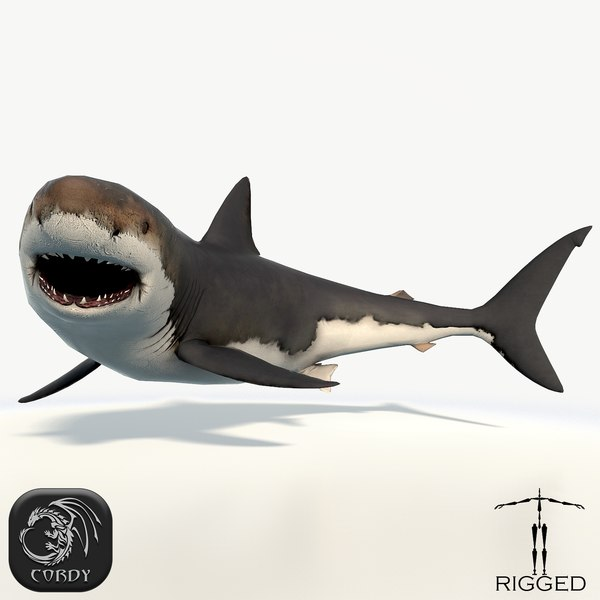 realistic rigged great white 3d model