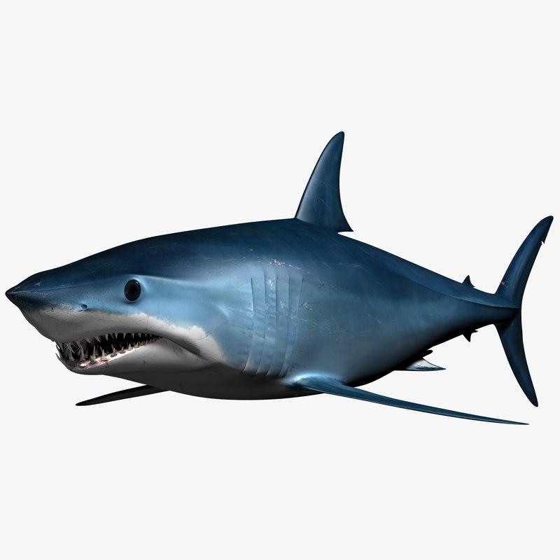 male mako shark 3d max