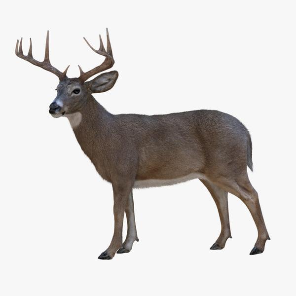 ma deer animations 2 fur