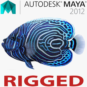 juvenile emperor angelfish rigged 3d ma