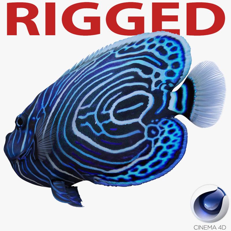 juvenile emperor angelfish rigged 3d model