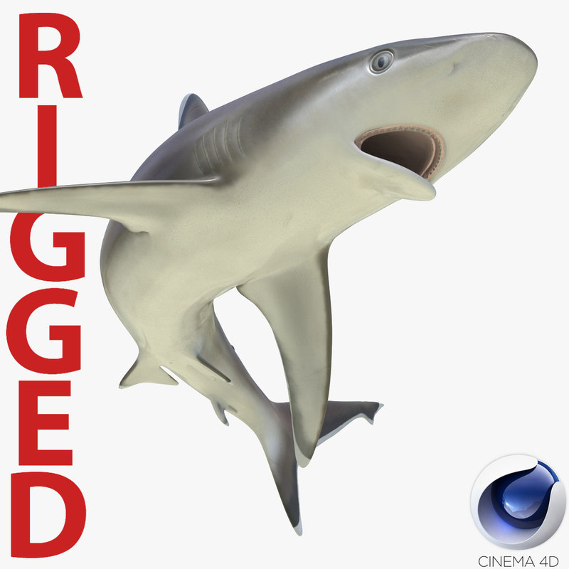 3d silvertip shark rigged