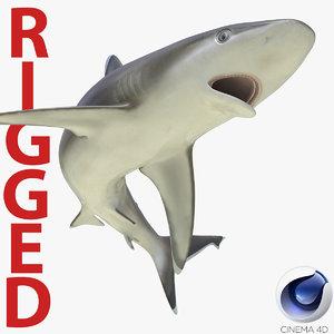 3d silvertip shark rigged