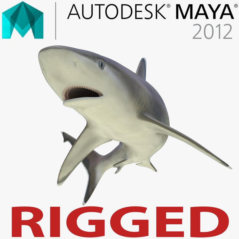 3d model silvertip shark rigged