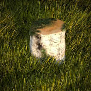 birch stump max free