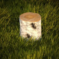 3d birch stump model